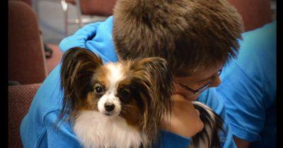 Dieser 3 Pfund schwere Hund rettet einem Jungen das Leben