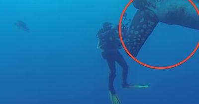 Unglaublich seltene Begegnung: Dieser Taucher trifft einen RIESIGEN Mondfisch!