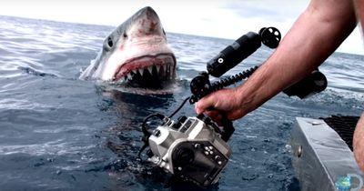 Dieser Filmemacher hat eine wahnsinnige Aufnahme gemacht