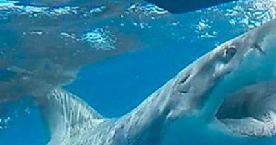 So überlebst du einen Hai-Angriff!