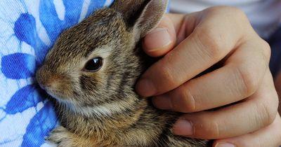 An alle Kleintierfreunde: Diese Infos MÜSST ihr wissen!