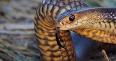 Die giftigsten Schlangen der Welt