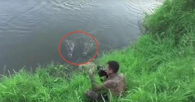 Schock: Krokodil attackiert Fotografen!