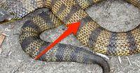 5 Fakten über Schlangen, die du noch nicht kanntest!