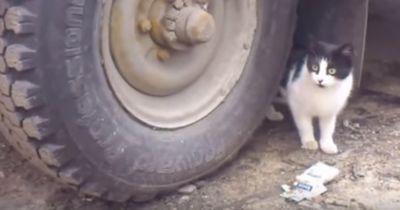 Verzweifelt sucht diese Katze ihre Beute: Kannst du sie erkennen?
