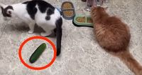 Diese Katzen haben einen ungewöhnlichen Gegner...