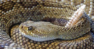 Heftig: Diese 5 Dinge über Schlangen verschlagen dir die Sprache!
