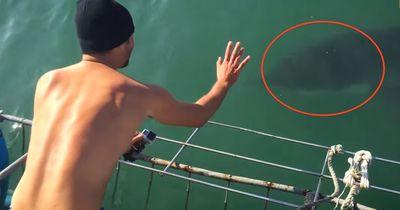 Absolut tödlich: Ein weißer Hai beißt zu!