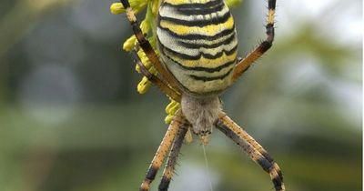 Diese Spinnen können bald Leben retten
