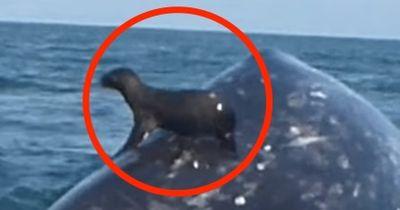 Sie konnten nicht glauben, worauf die Robbe da sitzt!