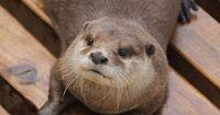 Freundschaft mal anders: Ein Otter auf Abwegen mit Löwen und Hyänen!