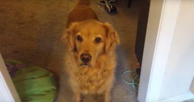 So frisst euer Hund auch Futter, das er eigentlich nicht gerne mag!