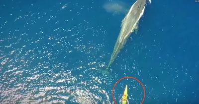 Majestätisch: Schwimmen mit dem größten Tier der Welt - dem Blauwal