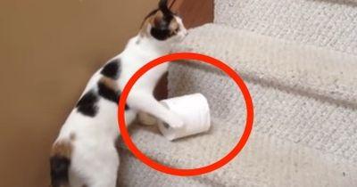 Diese Katze tut etwas sehr Ungewöhnliches...