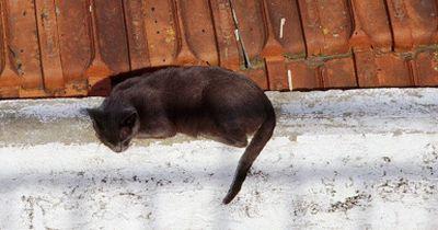 Schwarze Katzen bringen Unglück - woher kommt dieser Irrglaube?