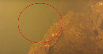 Dieser Hai wurde lebendig in einer außergewöhnlichen Umgebung gefunden