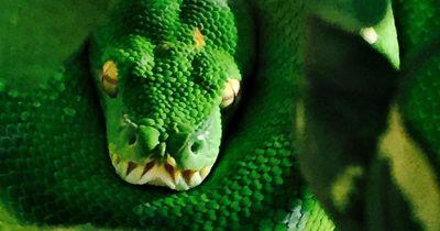 5 interessante Fakten über Schlangen