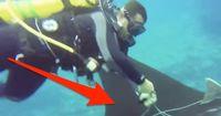 Ungewöhnliche Rettung: Diese Taucher stoßen auf etwas Unfassbares!