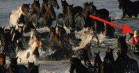 200 Pferde warten seit 3 Tagen auf ihren Tod, bis 6 Frauen ihr Leben riskieren!