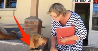 Kein normaler Labrador! Wer genau hinsieht, erkennt die grausame Wahrheit!