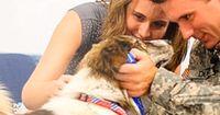 Wie 3 Hunde 50 Soldaten in Afghanistan gerettet haben