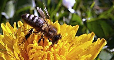 So kannst du dem Stich einer Biene vorbeugen!