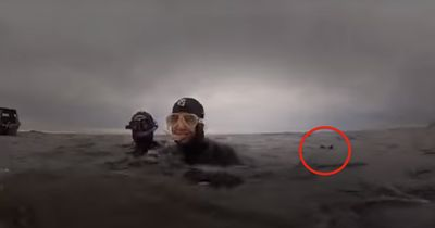 Stell dir vor du schwimmst im Wasser und plötzlich überfällt dich dieses Tier