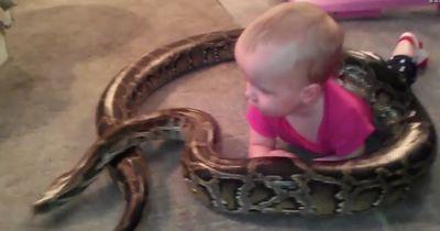 Sind diese Eltern verrückt? Riesige Python wickelt sich um Baby!