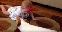 Dieser Hund ist ein toller Lehrer!