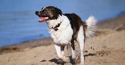 Hunde - die 5 größten Irrtümer