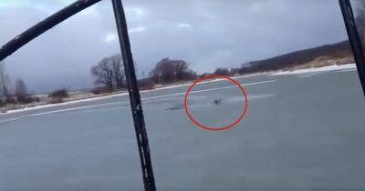 Dieser Hund steckt in einem vereisten See fest