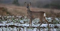 Können sich Wildtiere im Winter eigentlich erkälten?