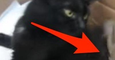 Diese Katze hat ein ungewöhnliches Baby!