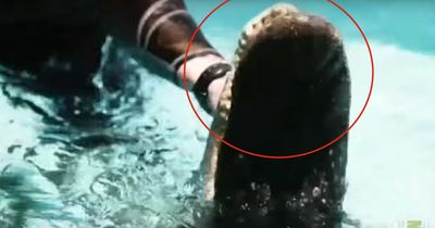Dieses Tier verirrte sich in einen Pool!