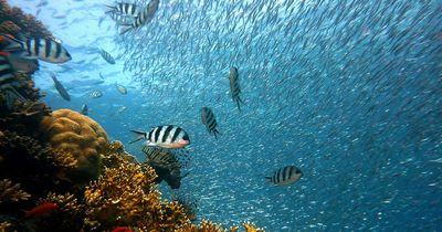 Können Fische ertrinken?