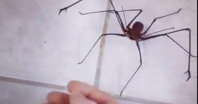 Die Spinne greift einen Menschen an