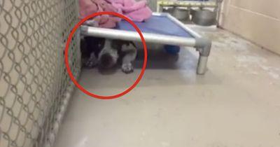 Sie versteckt sich im Tierheim unter einem Bett