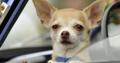 5 Dinge über deinen Hund, die du nie für möglich gehalten hättest!