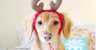 Jingle-Bells: Das BRAUCHT dein Hund zu Weihnachten!
