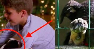 Er bekommt einen Hund. 2 Wochen finden sie ihn dort.