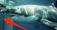 Käfigtauchgang außer Kontrolle: Weißer Hai gelangt IN den Käfig!