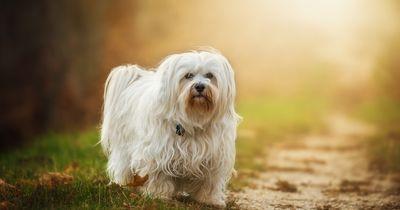 Er findet einen verlorenen Hund, aber gibt ihm seinen Besitzer nicht zurück
