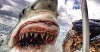 So verhältst du dich bei einem Haiangriff!