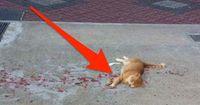 9 von 10 sehen eine Katze in einer Blutrache und müssen dann lachen!
