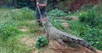 """""""Man beißt nicht die Hand, die einen füttert"""" - ein Krokodil beißt zu!"""