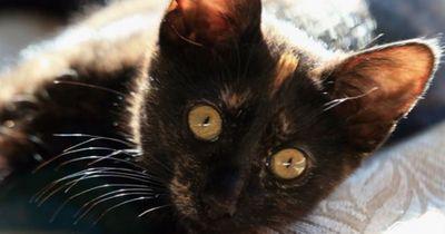Katzen können dich nicht leiden?
