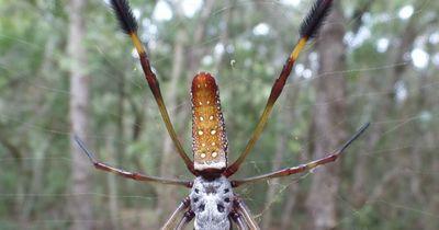Die giftigste Spinne der Welt