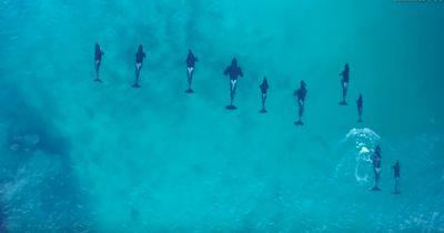 Schlaue Riesen: Schwimmen mit wilden Orcas!