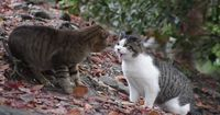 Brutaler Machtkampf zweier Katzen!