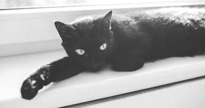 Deshalb sollte man eine schwarze Katze adoptieren.